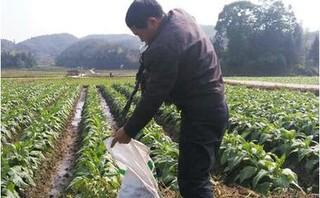 南通市如东县开展地膜残膜回收利用送科技服务活动
