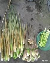 刺竹笋的功效与作用