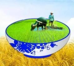揭开中国农业的真面目,农业为何不赚钱?