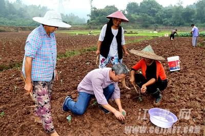江津蔡家镇发展特色种植 助贫困村民脱贫致富