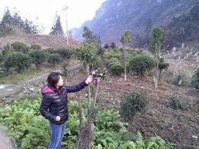 花卉苗木分情况施肥