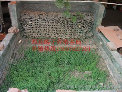 塑料大棚蝎子养殖技术指南