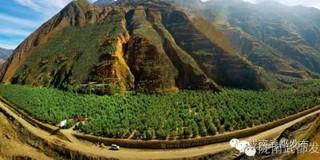丽江永胜第一家油橄榄林农种养合作社成立