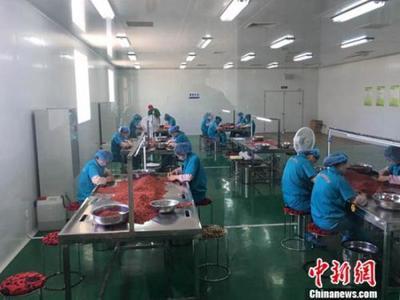 宁夏全力推进枸杞产业发展
