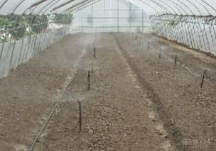 温室种植食用菌采用微喷节水降温