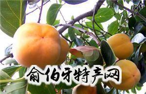 北京大磨盘柿