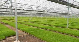 温室蔬菜春季温度管理要点