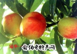 肃宁县无公害水果