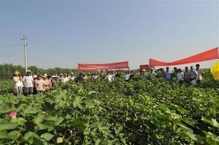 河北推广棉花前重式简化栽培600万亩