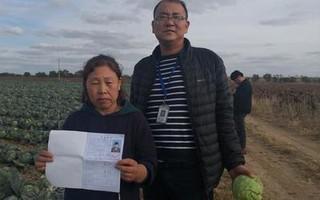 2万亩蔬菜滞销 10万斤爱心圆白菜今日从尚义发往北京