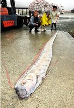 带鱼是怎样打捞的