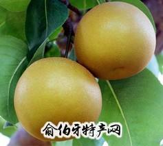 金棠黄花梨
