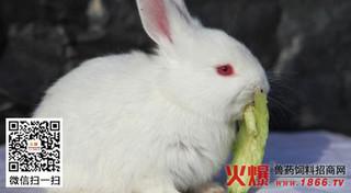 夏季断奶幼兔咋养