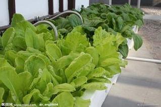 长春芹菜等13种蔬菜降价