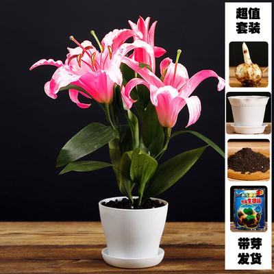 进口百合花有哪些品种?进口百合花如何种植?