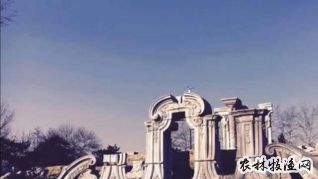中国好大米的上海印记