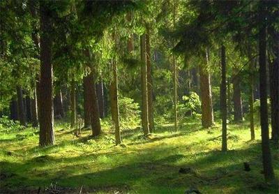 我国林业改革取得历史性突破