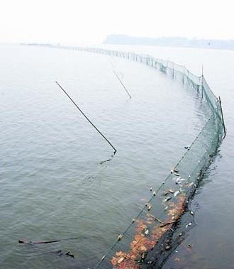 围栏养鱼巧捕捞-钓具捕捞法