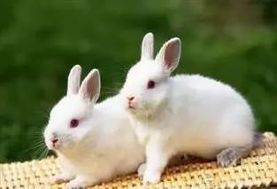 家兔冬季管理十要点