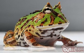 如何解决蛙类饲料问题