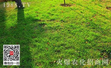 草坪除草剂、杀菌剂的使用