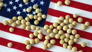 美大豆出口协会:美国大豆或永失中国市场