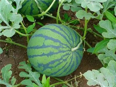 中央财政拟安排100亿元 支持农产品深加工
