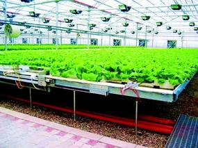 城郊设施农业节水高效工程技巧模式