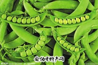 苗台大青豆