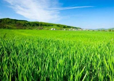 今年财政将从八大方面强农惠农