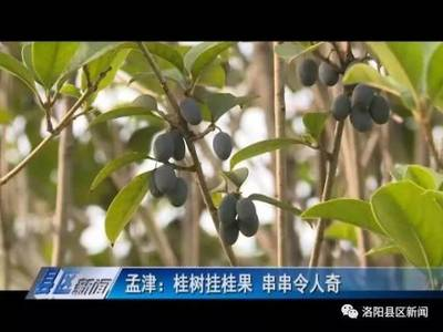种植八月桂树几年开花