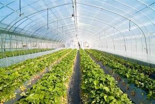 黄瓜温室育苗的设施和方法