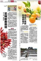 专家提醒:柑橘要增产 花后巧施肥