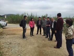 柳州市农业农村局党组书记温承全带队到柳城县调研指导柑桔产业发展