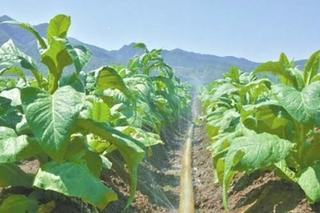 河南省农业节水灌溉面积达2700万亩