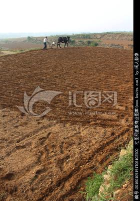 山区播种小麦该注意啥?