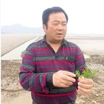"""浙江宁波:稻田里""""种""""出鱼虾蟹鳖"""