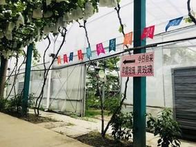 """上海马陆葡萄:""""一业优""""串起""""多业精"""""""