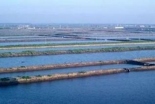 专家提醒:搞定水产养殖自身污染 才能提高效益!