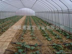 蔬菜大棚如何合理灌溉的步骤