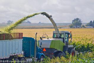 河南省:让青贮玉米全产业链更完善