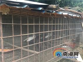 海南白沙:果子狸帮扶贫促增收
