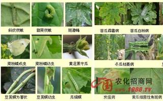雨季要注意及时防治蔬菜病虫害