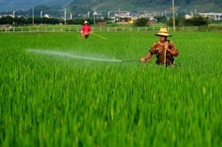 浙江应对梅涝灾害水稻病虫害防治意见
