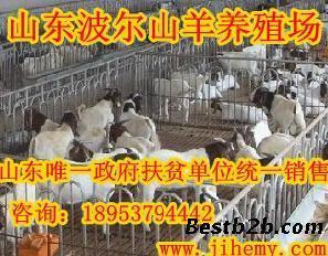 """彭水:肉牛养殖让日子""""牛""""起来 干群合力书写美丽新画卷"""