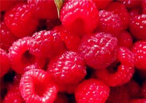 树莓几月份种植最好?树莓种植方法