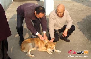 宁波宁海开展冬季犬类管理整治