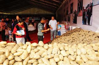 单季亩产9.58吨乐陵自主品种马铃薯创世界纪录