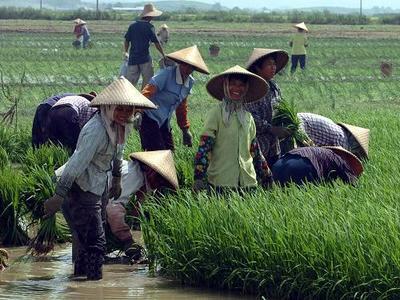 废除农业税