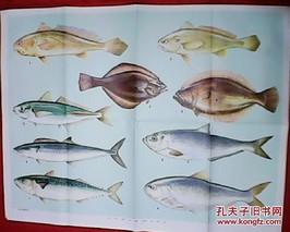 雪花金鲐鱼